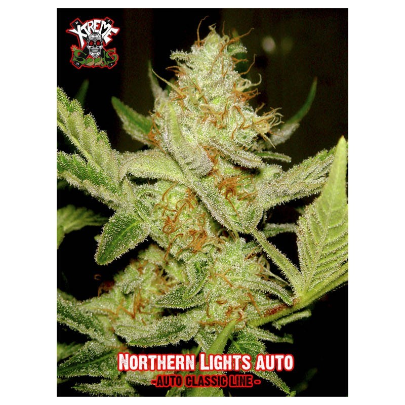 Northern Light Auto 3 semillas