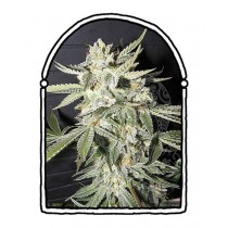 The Kush Brothers - Confidencial Medicine (1f)