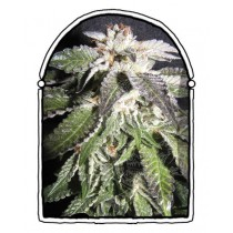 The Kush Brothers - Confidencial OG (3f)