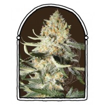 The Kush Brothers - Exotic Kush (1f)