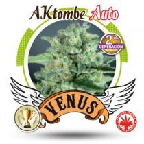 Venus Genetics - Aktombe Auto (5f)