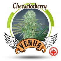 Venus Genetics - Cheese Kaberry (3f)