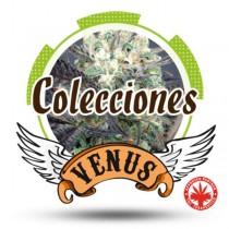 Venus Genetics - Coleccion Autos