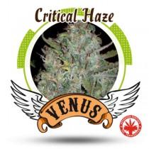 Venus Genetics - Critical Haze (3f)